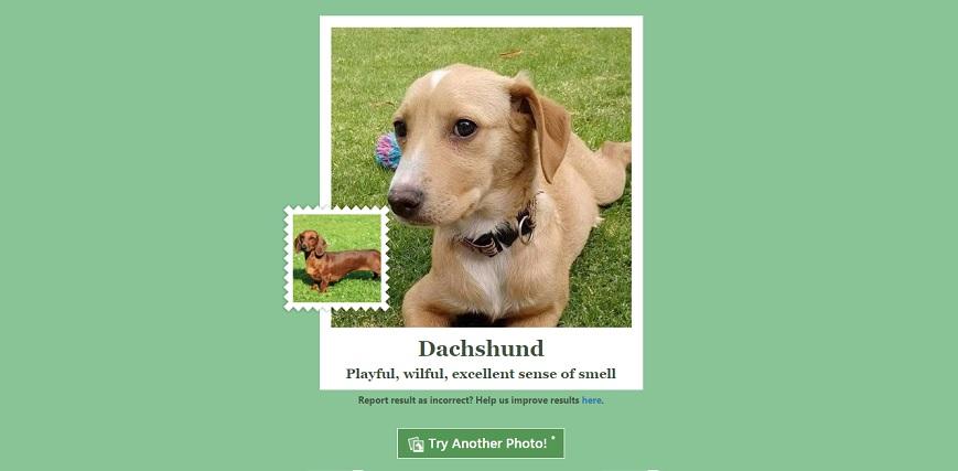 Microsoft lanza aplicacion que identifica la raza de tu perro